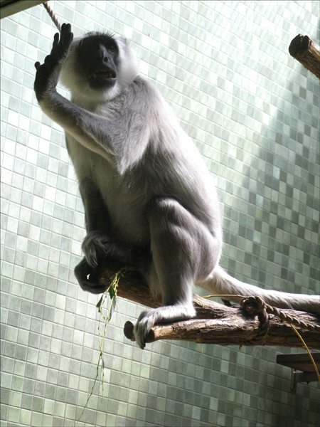 ape hand vert grimace.jpg