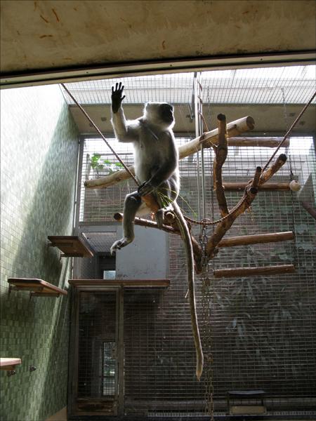 ape long.jpg
