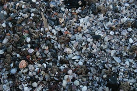 shells_wb.jpg