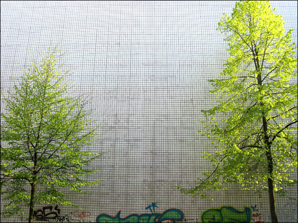 treewall.jpg